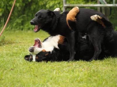 Hundekontakte